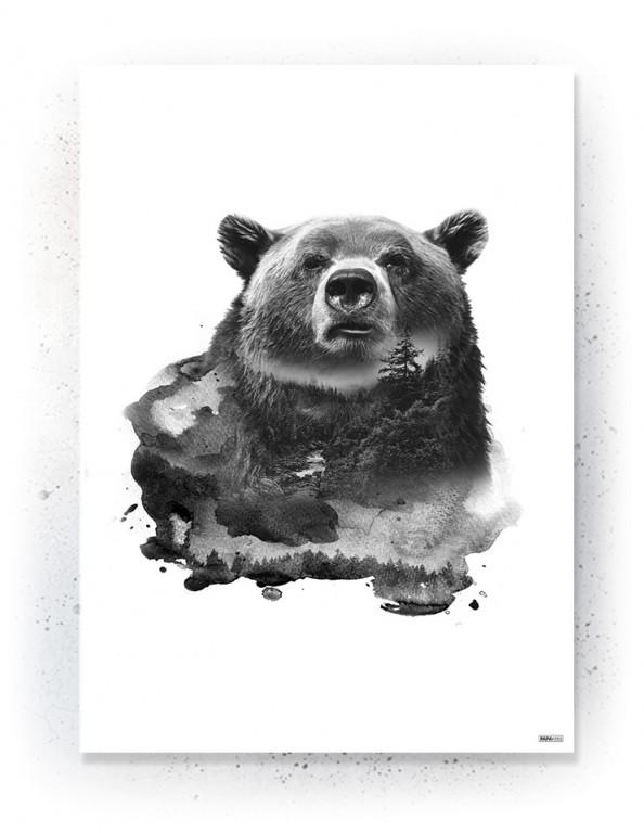 Plakat / Canvas / Akustik: Bear 1 (Animals)