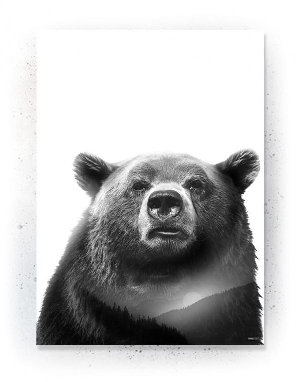Plakat / Canvas / Akustik: Bear 2 (Animals)