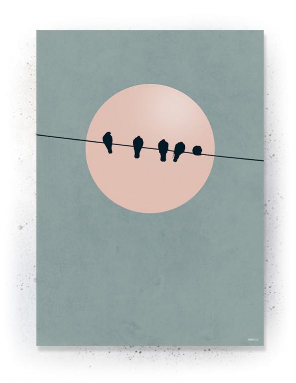 Plakat / CANVAS: BIRDS (Earth)