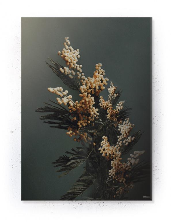 Plakat / canvas / akustik: Branch (Earth)