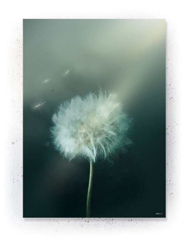 Plakat / CANVAS / Akustik: Dandelion 2 (Earth)