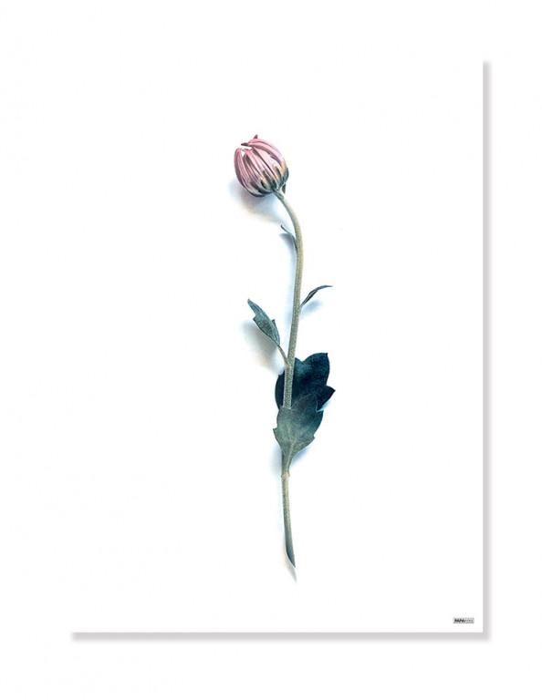 Plakat/Canvas: Flower (Bright)