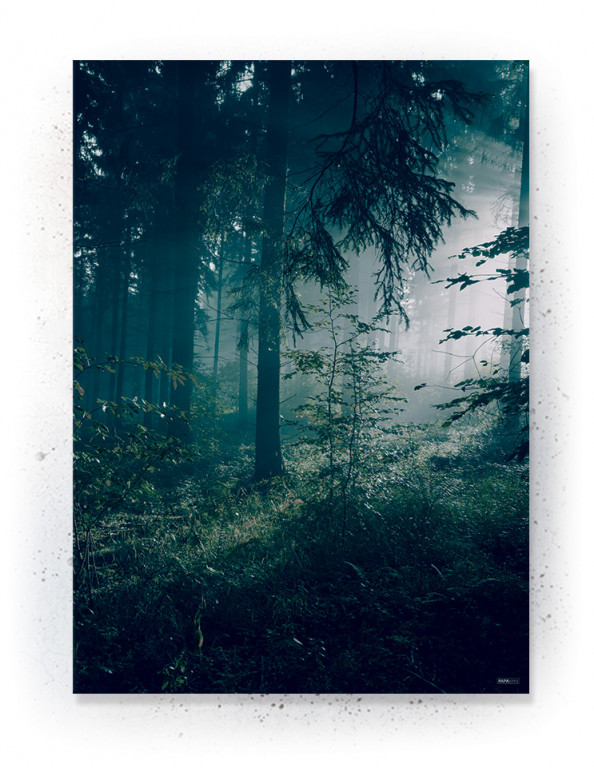 Plakat / CANVAS: Forest (Earth)
