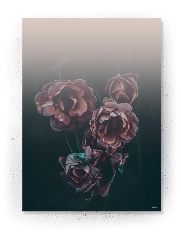 Plakater / Canvas / Akustik: Hanging Roses (Eclectic)