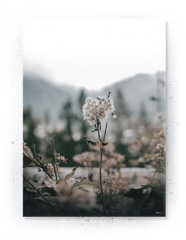 Plakat / Canvas / Akustik: Last Light (Withered)