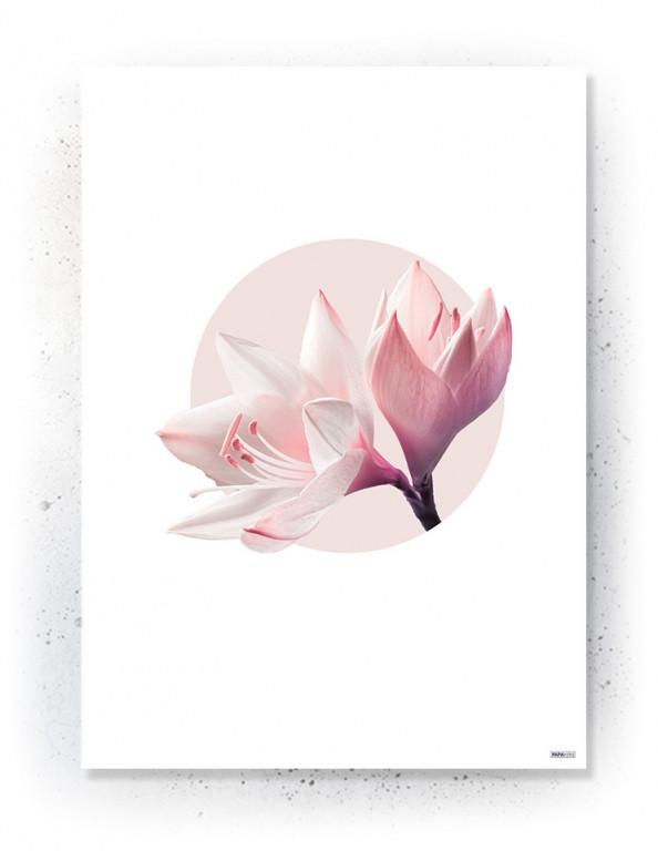 Plakat / canvas / akustik: Lily (MIDSOMMER)