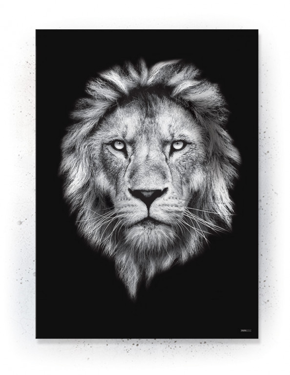 Plakat / Canvas / Akustik: Black lion (Animals)