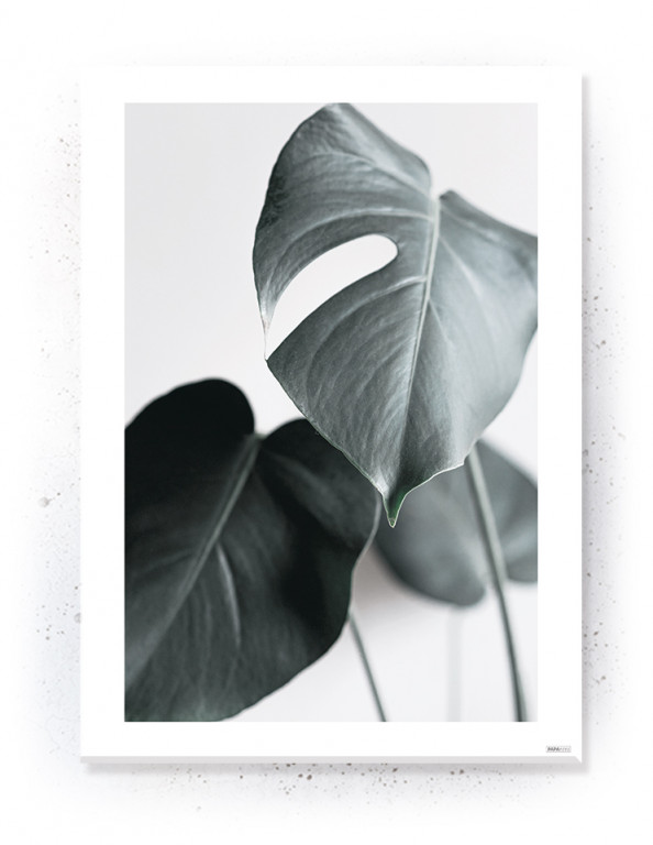Plakat / Canvas / Akustik: Monstera Passepartout (Withered)
