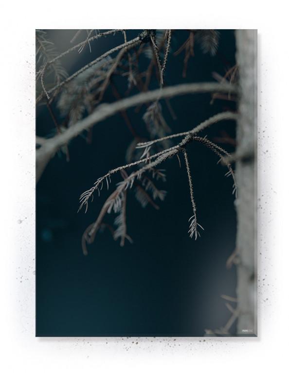 Plakat / Canvas / Akustik: Pine (Withered)