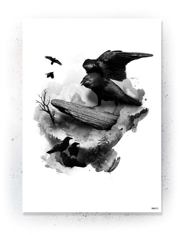 Plakat / Canvas / Akustik: Ravens (Animals)