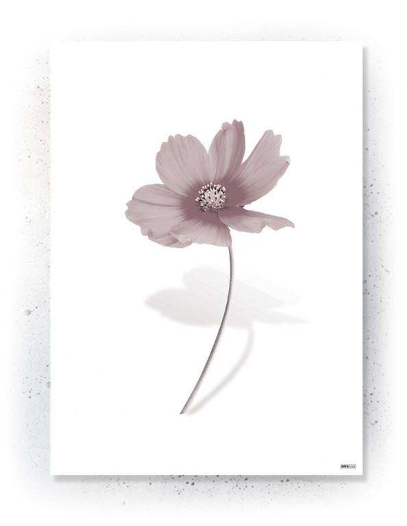 Plakat / canvas / akustik: Simpel blomst (Faded)