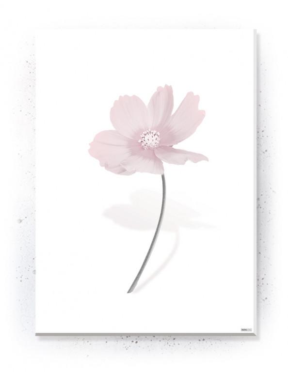 Plakat / Canvas / Akustik: Simple Flower (Flush Pink)