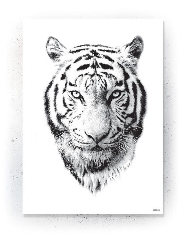Plakat / Canvas / Akustik: White Tiger (Animals)