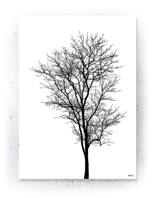Plakat / Canvas / Akustik: Træ i silhuet (Black)