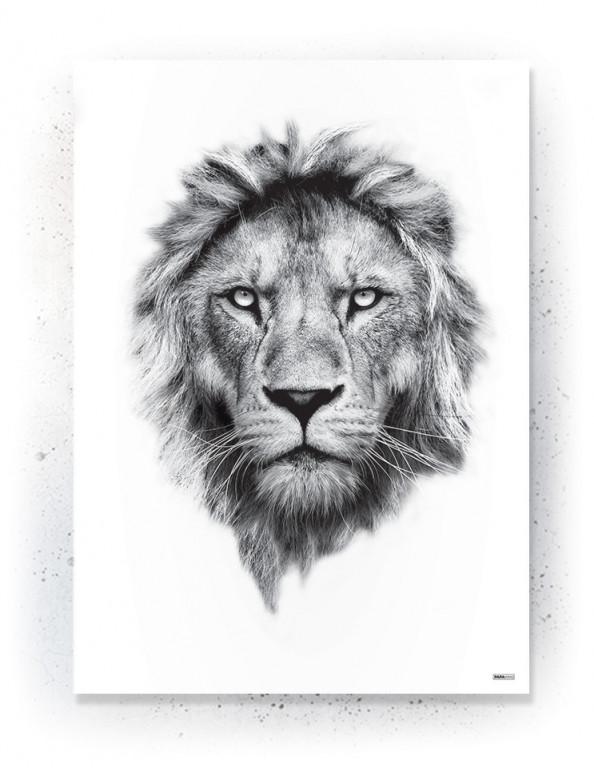 Plakat / Canvas / Akustik: White Lion (Animals)