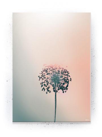Plakat / Canvas / Akustik: Allium blomst (Empowerment)
