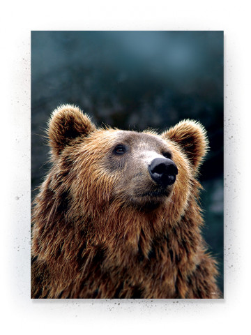 Plakat: Bear (Withered)