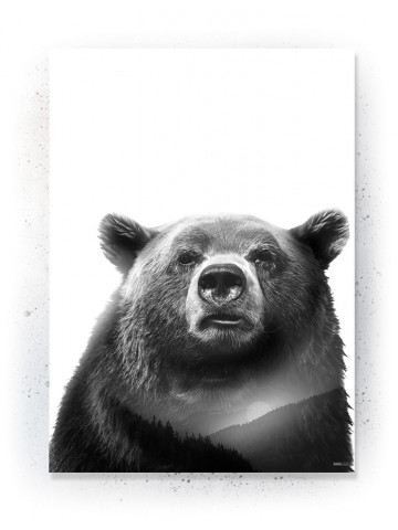 Plakat / Canvas / Akustik: Bear 2 (Animals)