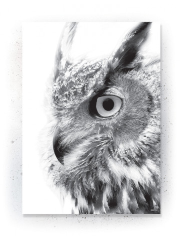 Plakat / Canvas / Akustik: Big Owl (Animals)