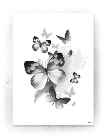 Plakat / Canvas / Akustik: Sommerfugle (Black)