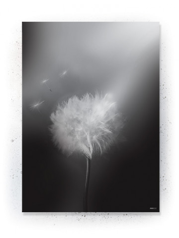 Plakat / Canvas / Akustik: Mælkebøtte 2 (Black)