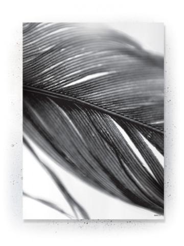Plakat / Canvas / Akustik: Detailed Feather (Black)