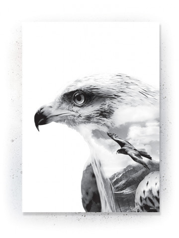 Plakat / Canvas / Akustik: Eagles (Animals)