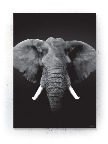 Plakat / Canvas / Akustik: ELEPHANT (Animals)