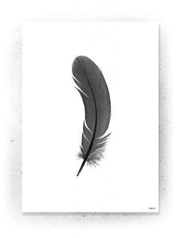 Plakat / Canvas / Akustik: Fjer i silouet (Black)