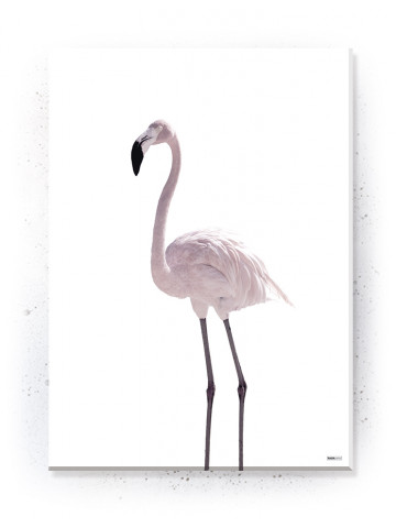 Plakat / Canvas / Akustik: Flamingo (Flush Pink)