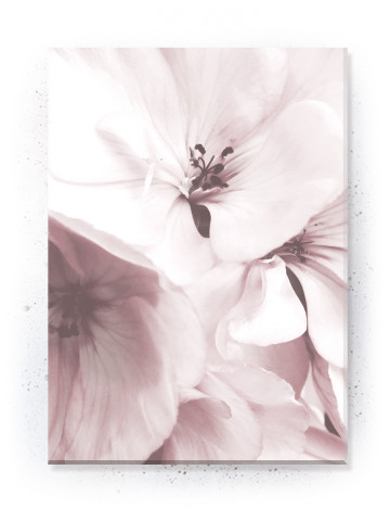 Plakat / Canvas / Akustik: Flowers (Flush Pink)