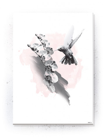Plakat / Canvas / Akustik: Kolibri & Orkide (Flush Pink)
