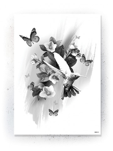 Plakat / Canvas / Akustik: Kolibri (Black)