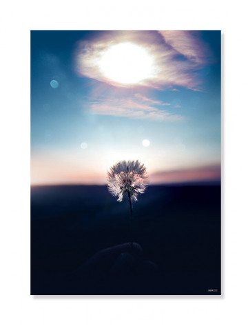 Plakat/Canvas: Make a Wish (IMAGINE)