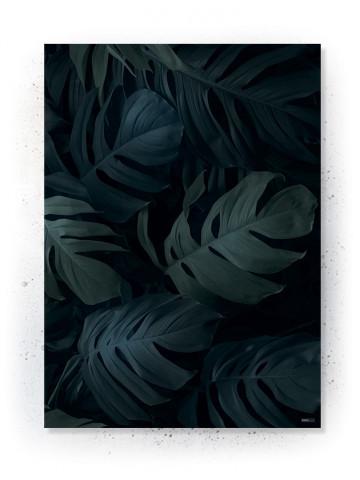 Plakat / Canvas: Monstera (VIVID)