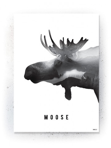 Plakat / Canvas / Akustik: Moose (Animals)