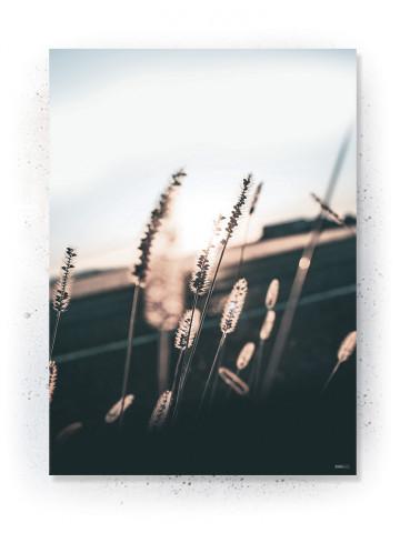 Plakat / canvas / akustik: Morning field (Earth)