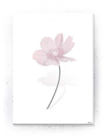 Plakat / Canvas / Akustik: Simple Flower (Flush Pink)