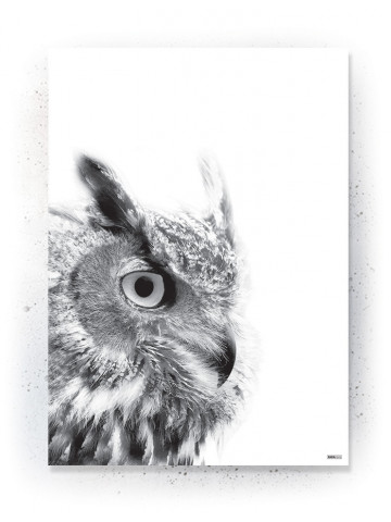 Plakat / Canvas / Akustik: Small Owl (Animals)