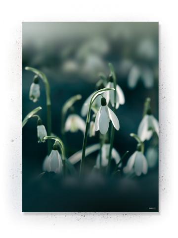 Plakat / canvas / akustik: Snowdrop (Earth)