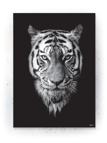 Plakat / Canvas / Akustik: Black Tiger (Animals)