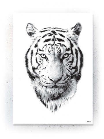 Plakat / Canvas / Akustik: White Tiger (Animals)