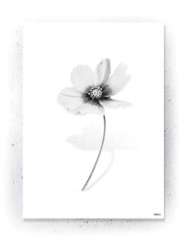 Plakat / Canvas / Akustik: White Flower (Black)