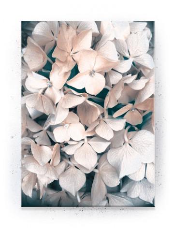 Plakat / Canvas / Akustik: Hvid blomst (Empowerment)