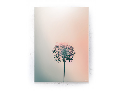 Plakat / Canvas / Akustik: Allium Flower (Empowerment)