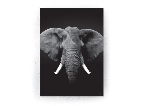 Plakat / Canvas / Akustik: ELEPHANT (Animals)