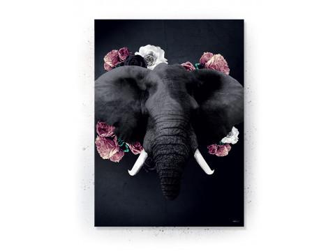 Plakat / canvas / akustik: Elephant (Desire)