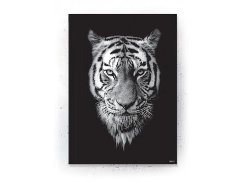 Plakat / Canvas / Akustik: Black Tiger (Animals)