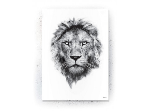 Plakat / Canvas / Akustik: Løve / hvid (Animals)