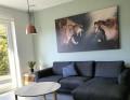 Plakat / Canvas / Akustik: Lions / Løve (r) (Animals / Panorama)